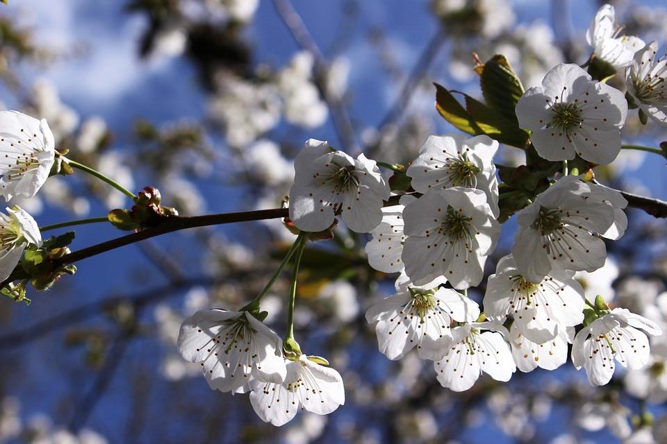 Trouble bipolaire  les changements de saison peuvent déclencher des épisodes
