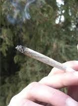 Le cannabis fortement concentré serait responsable de nouveaux cas de troubles mentaux